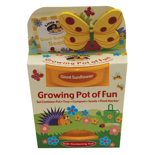 grow your own sunflower